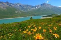 Erbe e Naturopatia Alpina